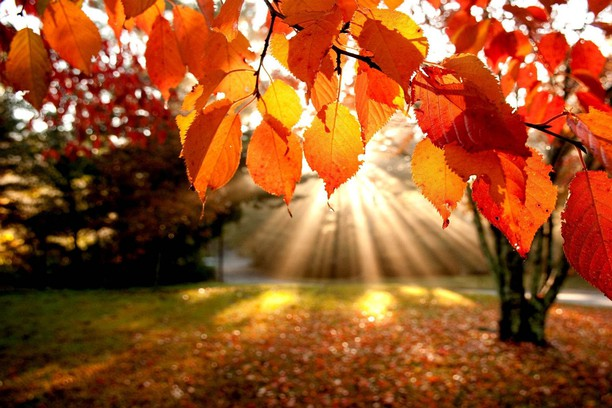 8 interesting facts about autumn